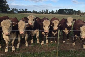 Stock and Land Beef Week Field Day – 2018