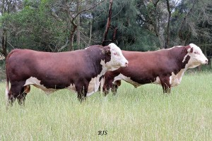 Stock and Land Beef Week Field Day – 2017